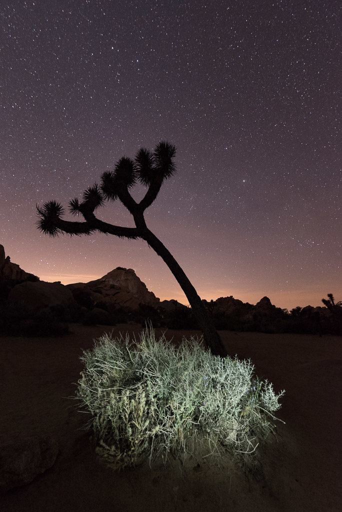 Joshua Tree-7862 ©Lance Keimig. All rights reserved.