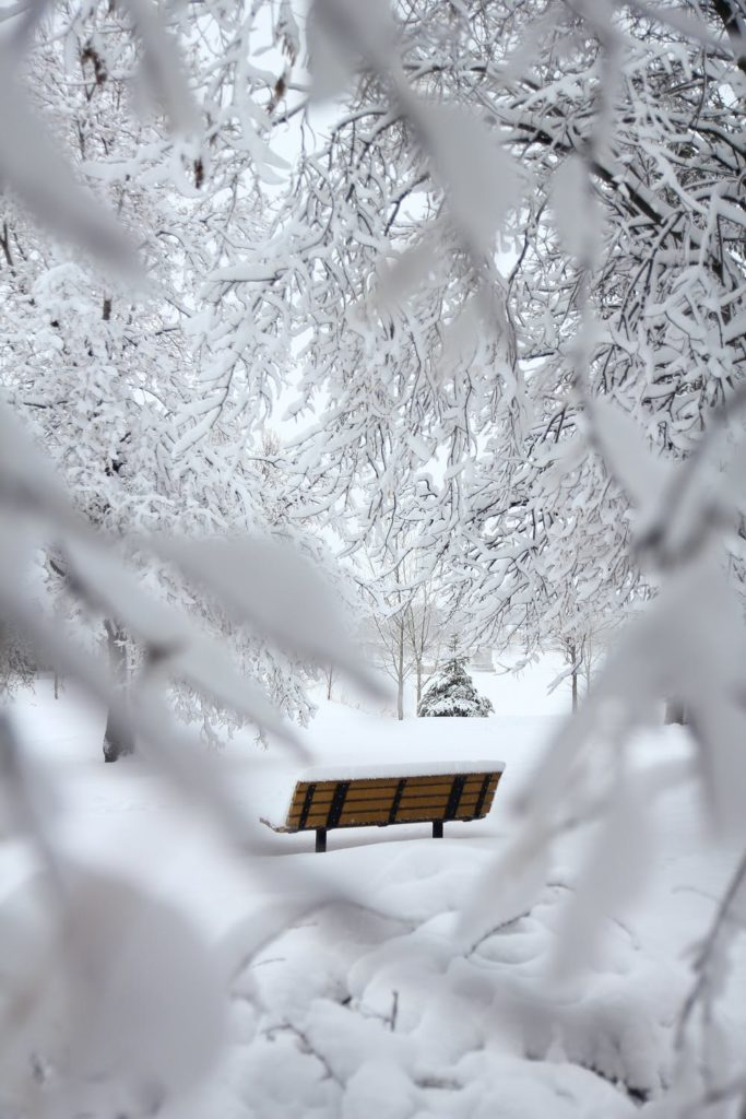 Park bench framed by snowy branches