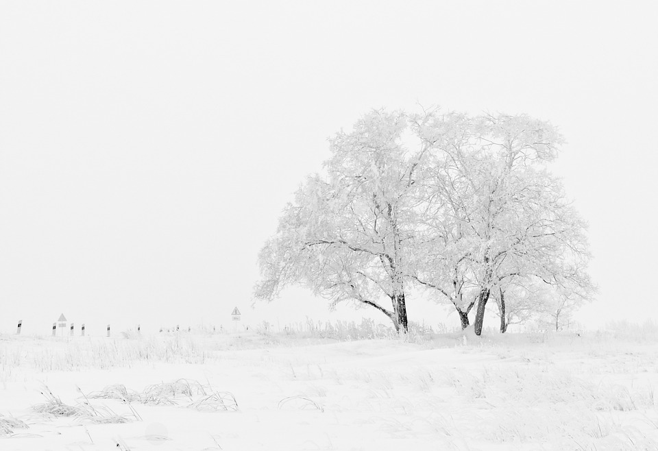 snow photography featuring a properly exposed winter scene