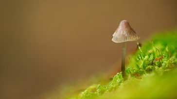 macro photograph of mushroom taken with Irix 15mm Dragonfly macro lens