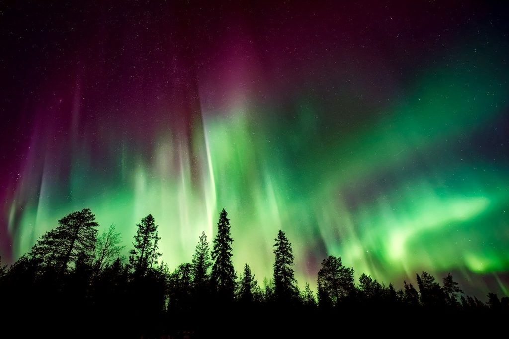 The Northern Lights behind treetops