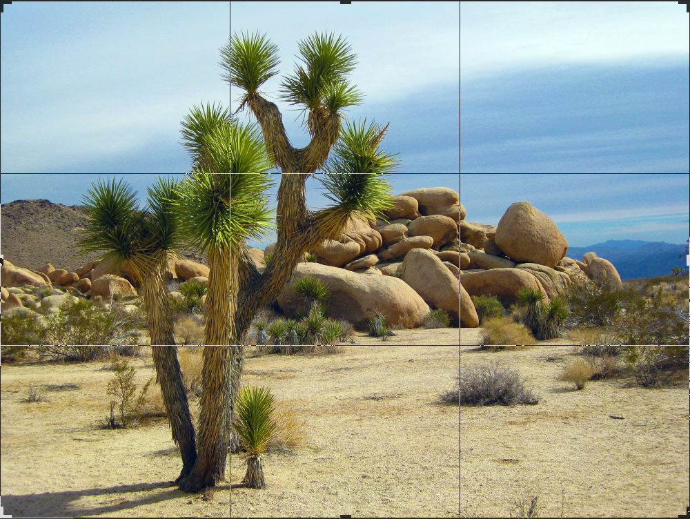 Landscape photo with Joshua tree in the foreground.