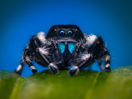 How to Photograph Spiders: Macro Gear and Methods