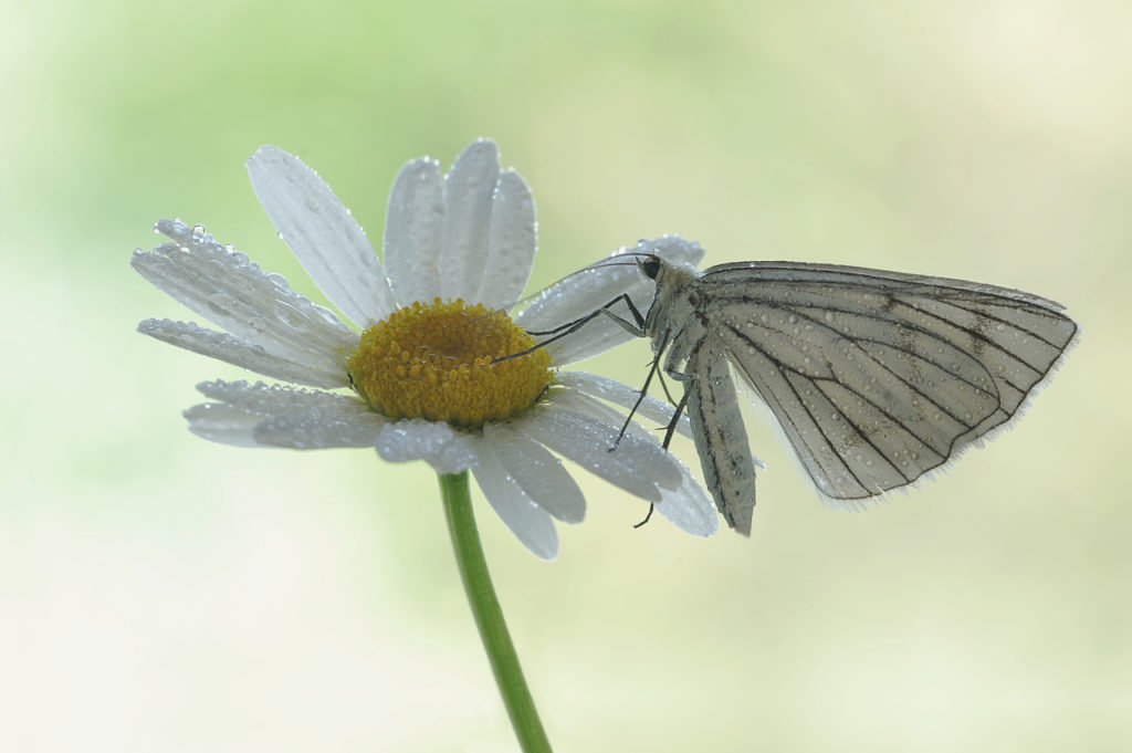 Macro Photo Flower with Butterfly